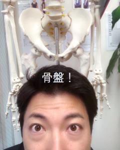 埼玉県 さいたま市 浦和区 県庁通り整体院 慢性腰痛 骨盤模型
