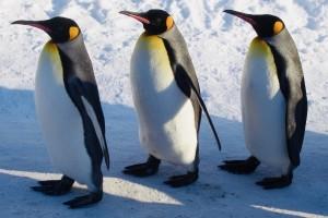 埼玉県 さいたま市 浦和 県庁通り整体院 ダイエット 産後骨盤 ペンギン